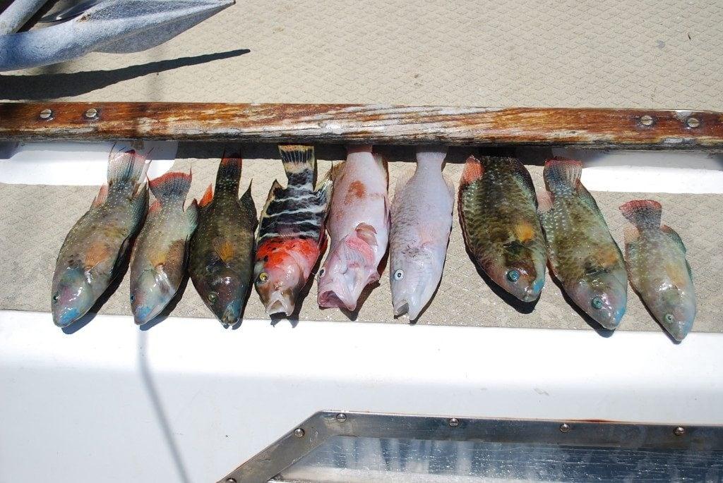 bogactwo ryb na pacyfiku