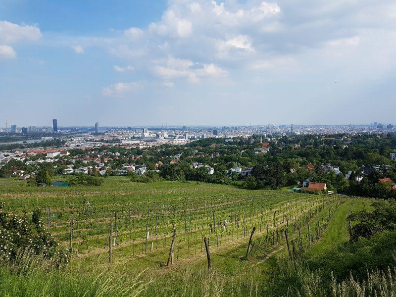 Wien für Spaziergänger*innenWien für Spaziergänger*innen
